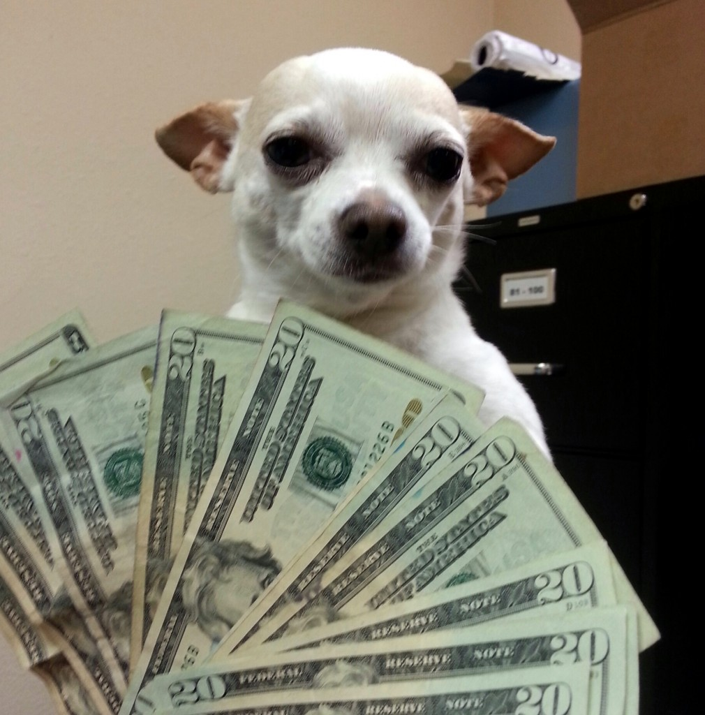 Frankie the Cash Blast Dog - PDX People
