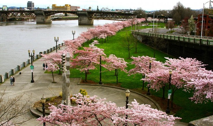 Spring 2017 – Learn More about Fun Things to Do In Portland Oregon