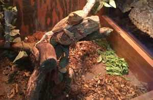 Pacific NW Reptile & Exotic Animal Show - 1